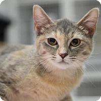 Adopt A Pet :: Ruthie - DFW Metroplex, TX