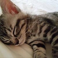 Adopt A Pet :: Silvan - Rosamond, CA