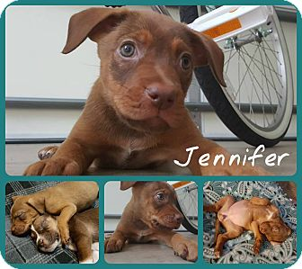 Hound (Unknown Type) Mix Puppy for adoption in Elon, North Carolina - Jennifer