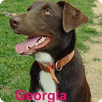 Adopt A Pet :: Georgia - Mountain View, AR