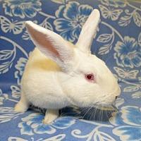 Adopt A Pet :: Mack - Chesterfield, MO