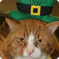 Adopt A Pet :: BEAR - Clayton, NJ