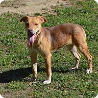 Adopt A Pet :: Robin-ADOPTED - Springfield, MA