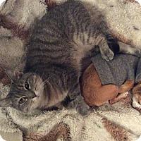 Adopt A Pet :: Chiska - Oak Park, IL