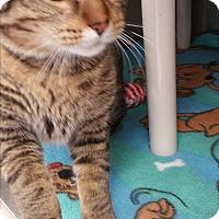 Adopt A Pet :: Mavis - Chippewa Falls, WI