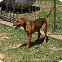 Adopt A Pet :: Tailor - New Boston, NH