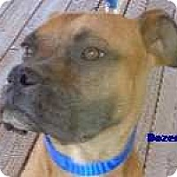 Adopt A Pet :: Dozer - Arenas Valley, NM