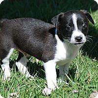 Adopt A Pet :: Chaplin - Providence, RI