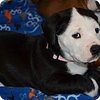 Adopt A Pet :: Clare - Danbury, CT