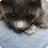 Adopt A Pet :: Rocky ( I need you) - Sterling Hgts, MI