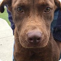 Adopt A Pet :: CoCo - Princeton, KY