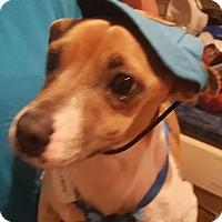 Adopt A Pet :: Zion - Andalusia, PA
