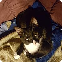 Adopt A Pet :: Veronica - Pensacola, FL