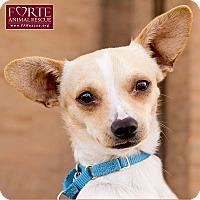 Adopt A Pet :: Chachi - Marina del Rey, CA
