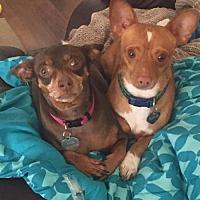 Adopt A Pet :: Maizy & Jackson - Las Vegas, NV