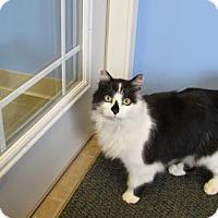 Adopt A Pet :: Bert - Northfield, MN