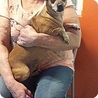 Adopt A Pet :: Hobbs - Westminster, CA