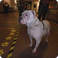 Adopt A Pet :: ID#A1689443 - Beverly Hills, CA