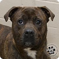 Adopt A Pet :: Niffler - Troy, OH