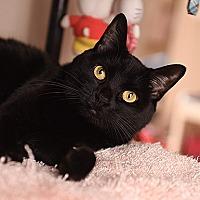 Adopt A Pet :: Felicity - Kanab, UT