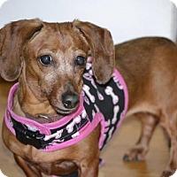 Adopt A Pet :: Roxie#1232 - Arlington Heights, IL