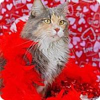Adopt A Pet :: Gypsy - Scottsdale, AZ