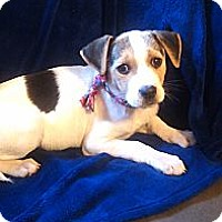 Adopt A Pet :: Chloe - Newark, DE