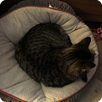 Adopt A Pet :: Adam - Hastings, MN