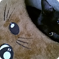 Adopt A Pet :: B O O - Brea, CA
