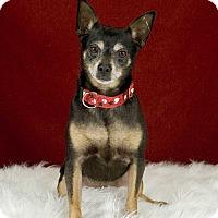 Adopt A Pet :: Berto - San Diego, CA