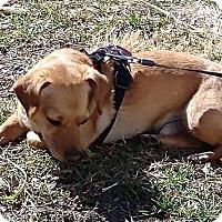 Adopt A Pet :: Wilson - Lincoln, NE