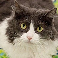 Adopt A Pet :: Rosalee - Great Falls, MT