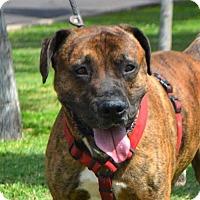 Adopt A Pet :: Oden - Goodyear, AZ