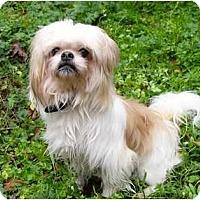 Adopt A Pet :: Hobbs - Mocksville, NC