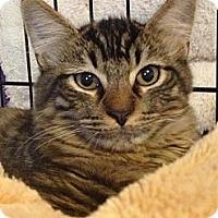 Adopt A Pet :: Beacon - Monroe, GA