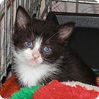 Adopt A Pet :: Eden - Reston, VA