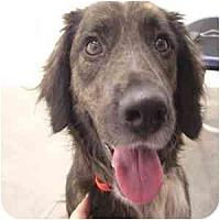 Adopt A Pet :: Neda - Phoenix, AZ