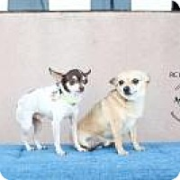 Adopt A Pet :: RC and Moonpie - Shawnee Mission, KS