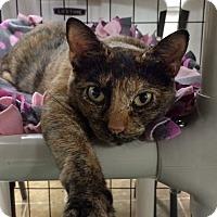 Adopt A Pet :: Dory - Bonner Springs, KS