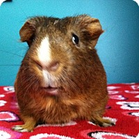 Adopt A Pet :: Shelby - Coral Springs, FL