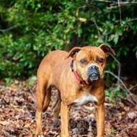 Adopt A Pet :: Scarlett - Wilmington, NC