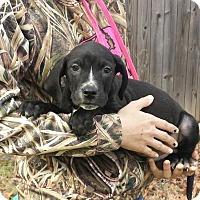 Adopt A Pet :: Lauren - Livingston, TX