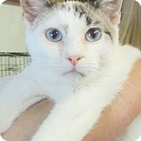 Adopt A Pet :: Mouse - Reeds Spring, MO