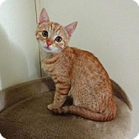 Adopt A Pet :: Butters - Lathrop, CA