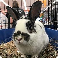 Adopt A Pet :: Bernice - Alexandria, VA