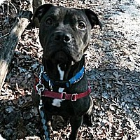 Adopt A Pet :: Daisy - Tinton Falls, NJ