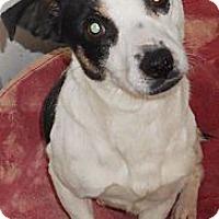 Adopt A Pet :: Terrier X - Aloha, OR