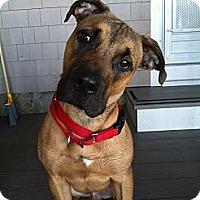 Adopt A Pet :: MUGSEY - Dennis, MA