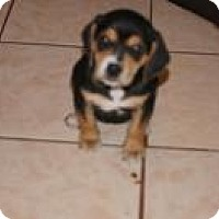 Adopt A Pet :: Snow White - Marlton, NJ