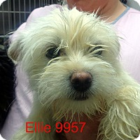 Adopt A Pet :: Ellie - Greencastle, NC